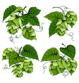 Hops graphics set vector image