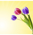 detailed tulips vector image vector image