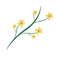 natural branch with flowers and leaves botanical vector image