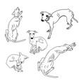 set of skinny italian greyhounds vector image