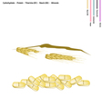 Wheat with Carbohydrate Protein Vitamin B1 and B vector image