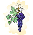Grapes with leaves vector image vector image