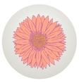 Beautiful gerbera flower vector image