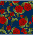 beautiful red rose - rosa on indigo blue vector image