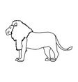 big lion african proud powerful nobility standing vector image