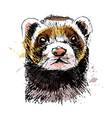 colored hand sketch head ferret vector image
