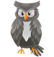 owl with black feather vector image