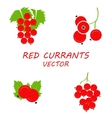 flat red currants icons set vector image