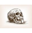 Human skull sketch style vector image