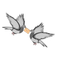 Two pigeons with a letter on a white background vector image