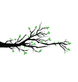 Branch with flowers vector image