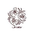 Handsketched bouquet of irises vector image