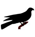 Falcon silhouette vector image