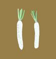 white daikon radish sketch vector image