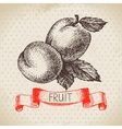 Hand drawn sketch fruit apricot Eco food vector image