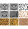 Animal skins vector image