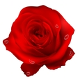 Realistic red rose EPS 10 vector image