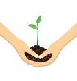 Two Hands holding young plant vector image