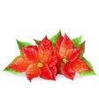 Christmas flower on a white background vector image