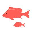 Crimson Snapper vector image vector image