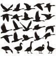 Geese silhouette vector image