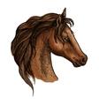 Brwon horse head profile portrait vector image