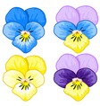 Set of Pansy vector image