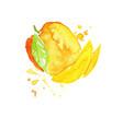 juicy ripe mango fruit watercolor hand painting vector image