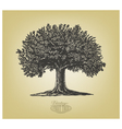 Tree in engraving style vector image