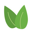 two leaves icon image vector image