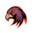 furious eagle sport logo concept isolated vector image