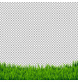 green grass border isolated vector image