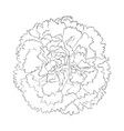 black and white carnation flower isolated on white vector image vector image