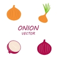 Onion icons set vector image