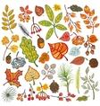Autumn leavesberriespine branchesconesFall vector image