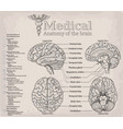 medical anatomy of human brain medicine vector image