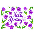 Hello Spring text with violet tulip flowers and vector image