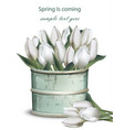 tulip flowers bouquet in a vintage vase vector image