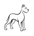 dog line drawing great dane can be used as logo vector image