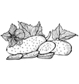 Monochrome drawing of cucumbers vector image