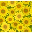 sunflower flower seamless background vector image vector image