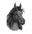 Black horse portrait with shiny dark eyes vector image