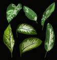 tropical leaf set vector image