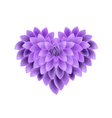 Violet Dahlia Flowers in A Heart Shape vector image