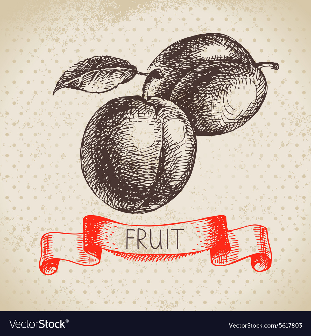 Hand drawn sketch fruits plum eco food background vector