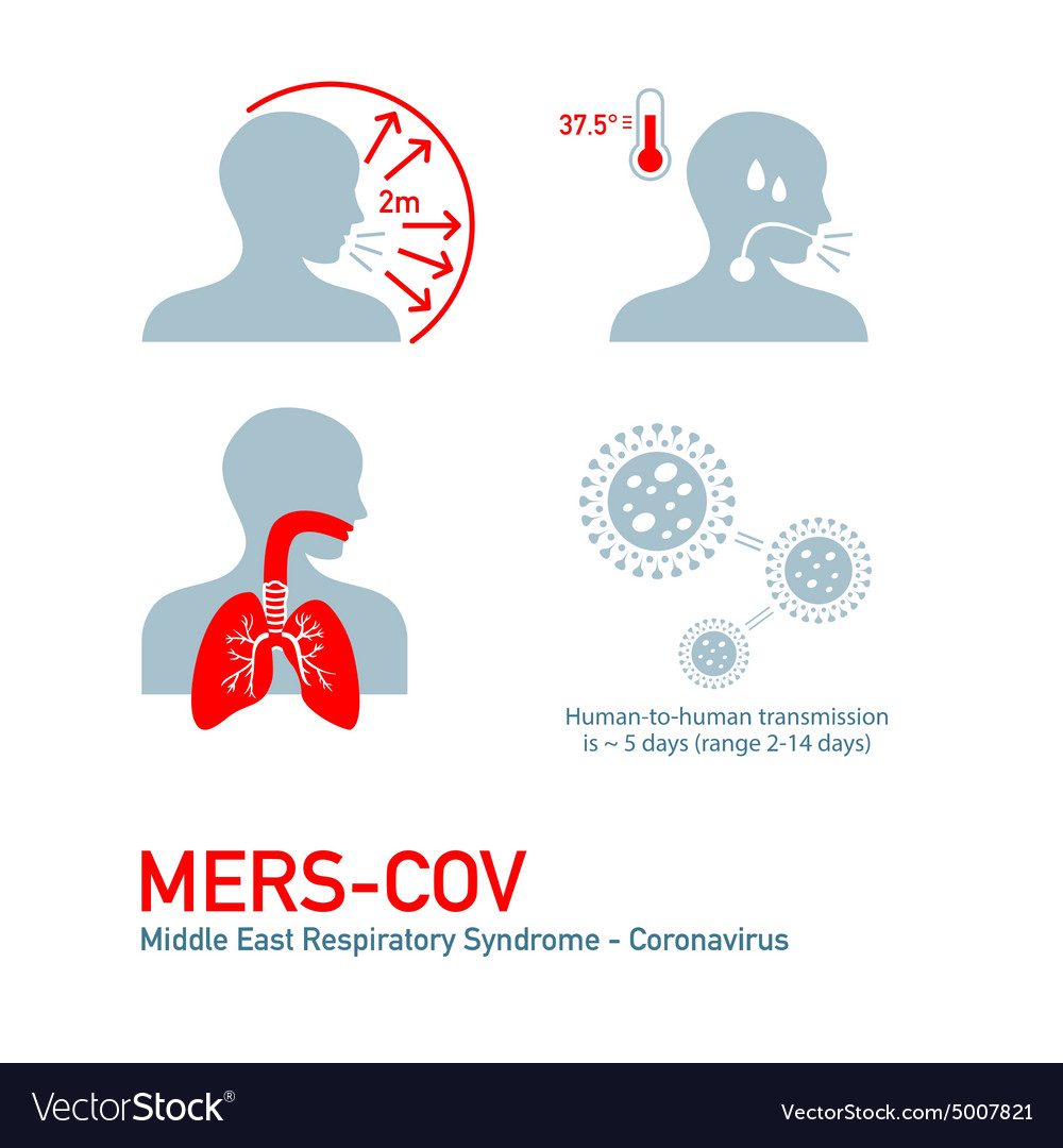Mers infection vector