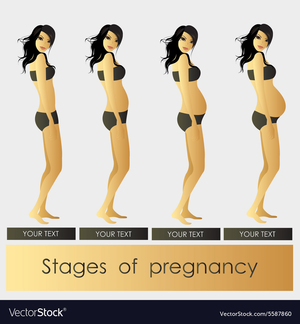 Stages of pregnancy beautiful girl vector