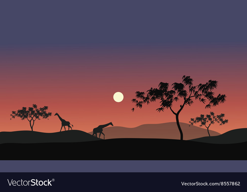 Silhouette of giraffes vector