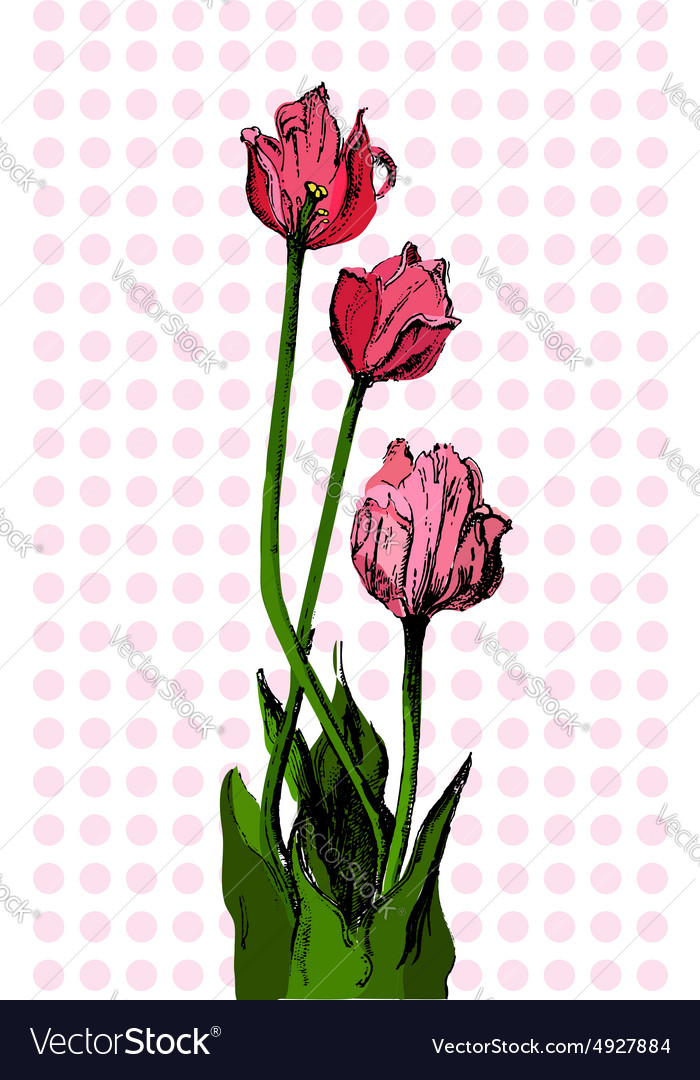 Hand drawn bouqet of tulip vector