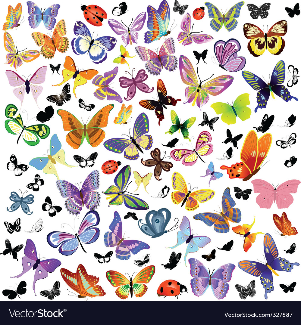 Set of ladybug and butterfly vector